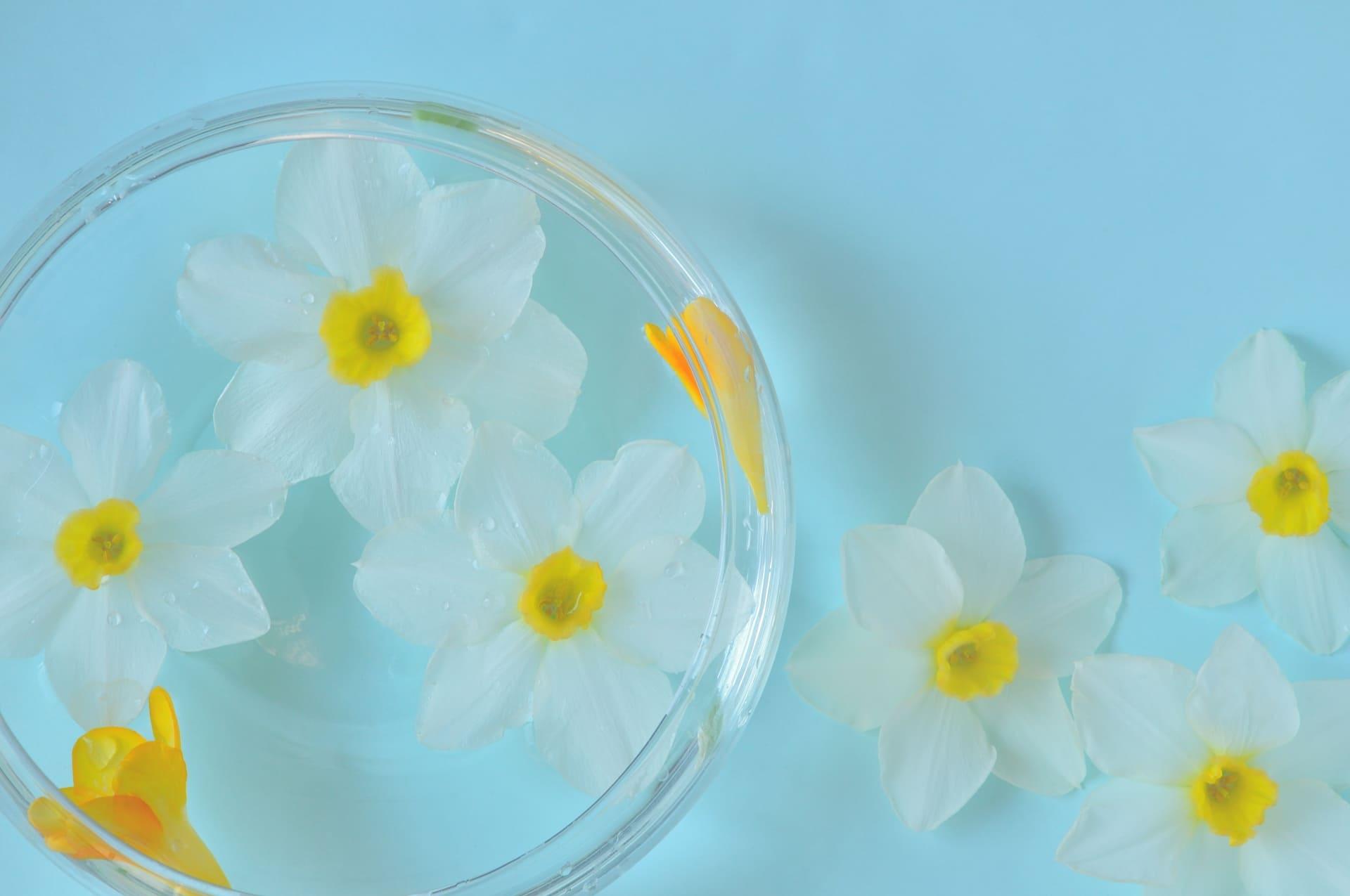 白い花とガラスの器