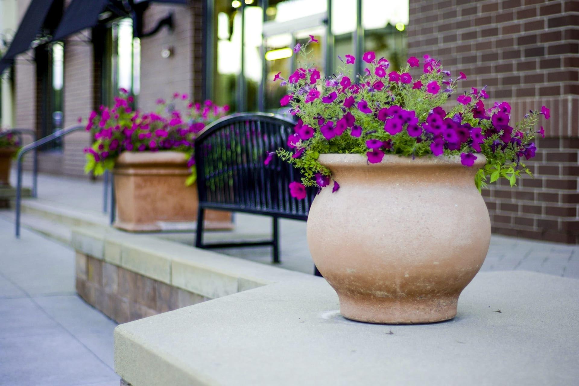 紫の花の花瓶からベンチの向こうを見極める